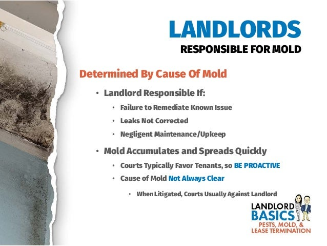 Mold In Bathroom Landlord Responsibility pests, mold, & lease termination: california landlord basics webinar