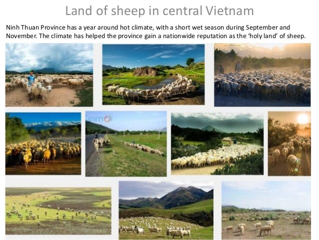 Land of sheep in central Vietnam Ninh Thuan Province has a year around hot climate, with a short wet season during Septemb...