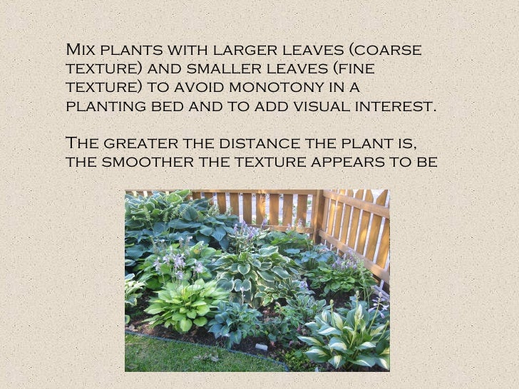 Mix plants with larger leaves (coarse texture) and smaller leaves (fine texture) to avoid monotony in a planting bed and t...