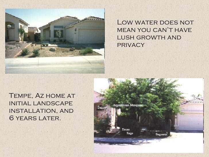 Low water does not mean you can't have lush growth and privacy Tempe, Az home at initial landscape installation, and 6 yea...