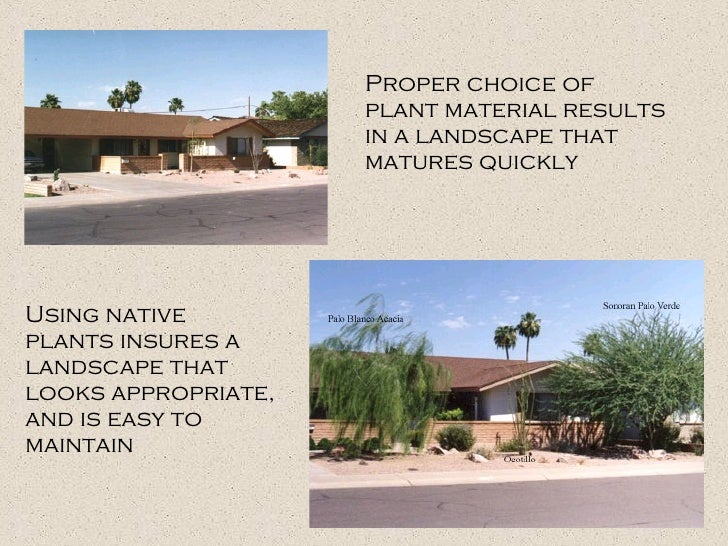 Proper choice of plant material results in a landscape that matures quickly Using native plants insures a landscape that l...
