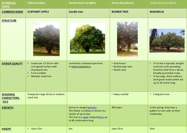 BOTANICAL NAME Coccoloba uvifera Artocarpus heterophyllus COMMON NAME SEA GRAPE JACK FRUIT TREE STRUCTURE DESIGN QUALITY •...