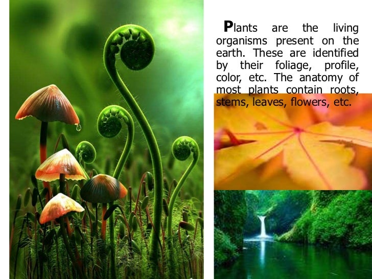 Plants     are the livingorganisms present on theearth. These are identifiedby their foliage, profile,color, etc. The anat...