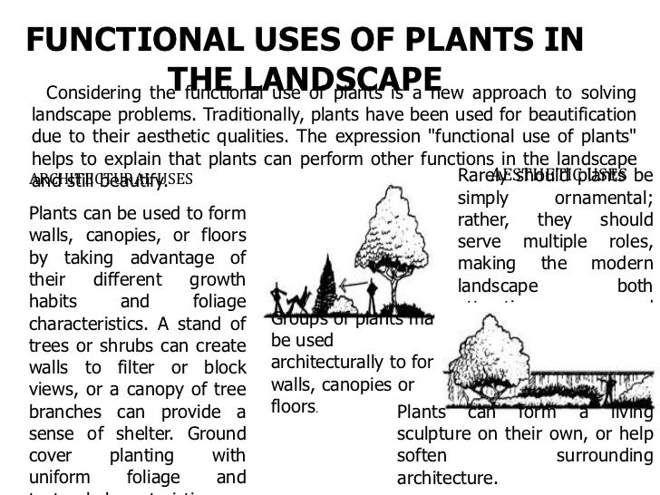 ENGINEERING USESTrees can stop or diffuse light before it reaches the ground. Engineeringfunctions of plants include using...