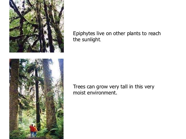 THE TEMPERATE    DECIDUOUS FORESTThere are four distinct seasons in the temperate deciduous forest:spring, summer, autumn,...