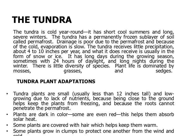 These tundra plants are low-growingThis plant grows in a clump tohelp conserve heat.
