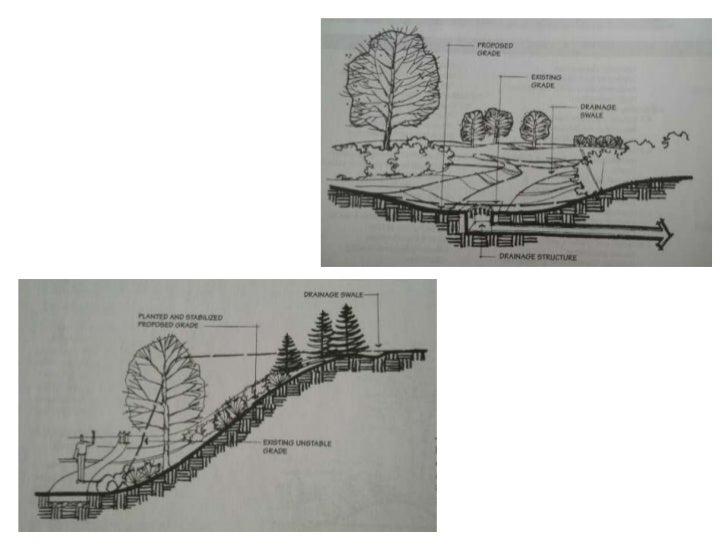 TYPICAL MULTI-STEM TREE       PLANTING