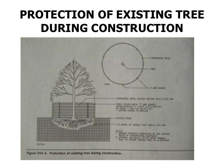 TYPICAL CONIFEROUS TREE        PLANTING(6FT HEIGHT AND SMALLER)