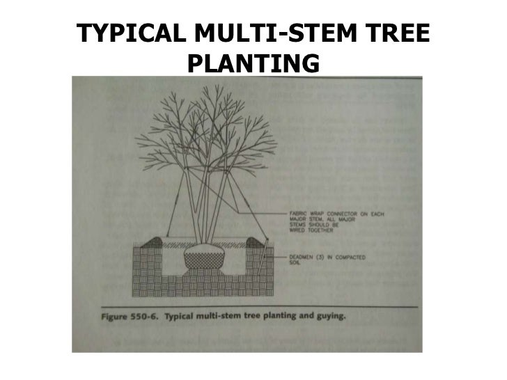 Typical shrub planting(bare root)