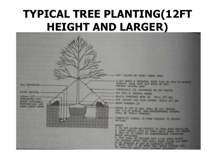 CUTTING OR LOWERING A GRADE            NEAR      AN EXISTING TREE