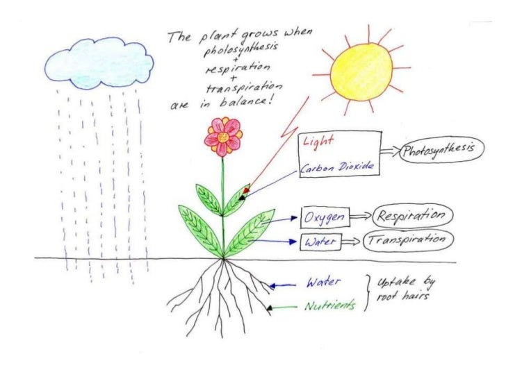 REQUIREMENTS FOR PLANTGROWTH will not compensate for poor growing conditions Hydroponic systemssuch as improper temperatur...