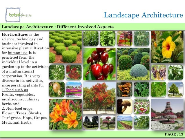 Top 28 types of plants used in landscaping for Types of landscaping plants