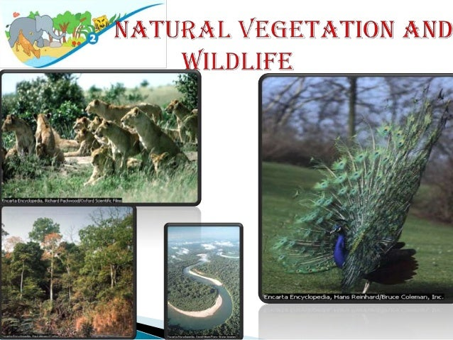 essay on natural vegetation and wildlife This is a simple project done on natural vegetation and wildlife of india by me, piyush i am uploading this as a had spent a lot of time in writing this project i.