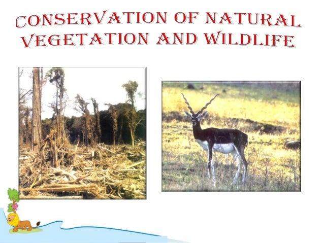 Land Soil Water Natural Vegetation And Wildlife