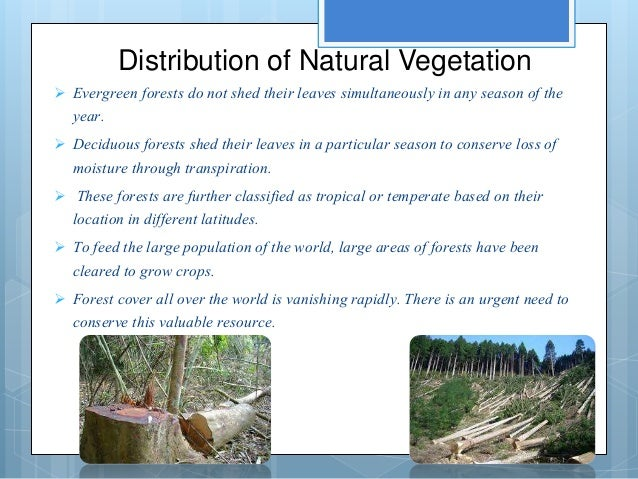 soil and natural vegetation Natural vegetation is affected the by climate and soil type soil is composed of 4 main parts - minerals, bacteria/organic materials, air and moisture all the information from our presentation will be on the handout we will give out, so please pay attention to the presentation, not note taking.