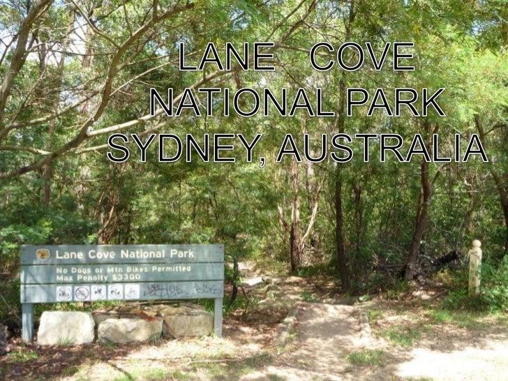 LANE   COVE<br />NATIONAL PARK<br />SYDNEY, AUSTRALIA<br />