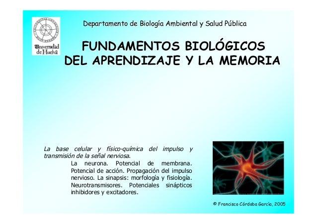 Departamento de Biología Ambiental y Salud Pública         FUNDAMENTOS BIOLÓGICOS       DEL APRENDIZAJE Y LA MEMORIALa bas...