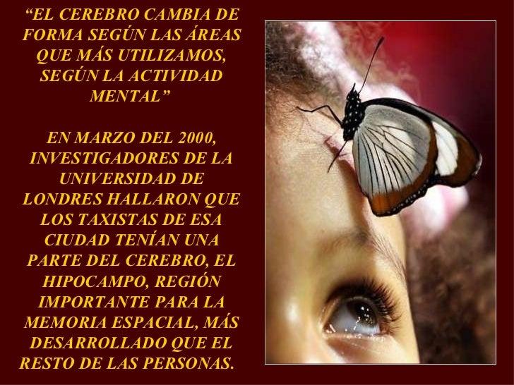 """"""" EL CEREBRO CAMBIA DE FORMA SEGÚN LAS ÁREAS QUE MÁS UTILIZAMOS, SEGÚN LA ACTIVIDAD MENTAL""""  EN MARZO DEL 2000, INVESTIGAD..."""