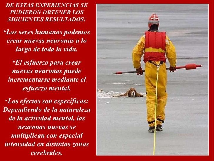 <ul><li>DE ESTAS EXPERIENCIAS SE PUDIERON OBTENER LOS SIGUIENTES RESULTADOS: </li></ul><ul><li>Los seres humanos podemos c...