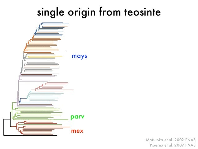 single origin from teosinte  Matsuoka et al. 2002 PNAS  Piperno et al. 2009 PNAS  mays  parv  mex