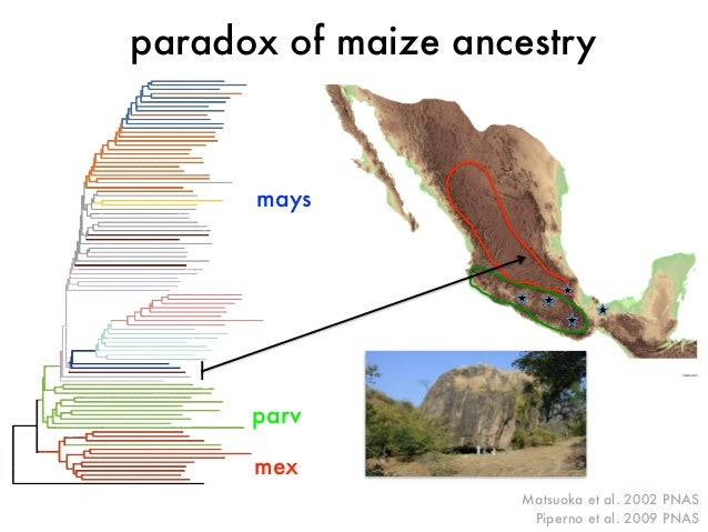 paradox of maize ancestry  Fig. 2. A view of the enormous boulder that formed the Xihuatoxtla Shelter.  Matsuoka et al. 20...