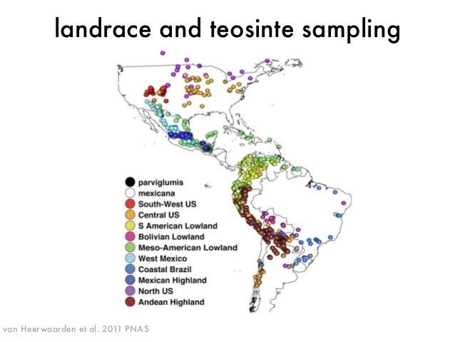 landrace and teosinte sampling  van Heerwaarden et al. 2011 PNAS