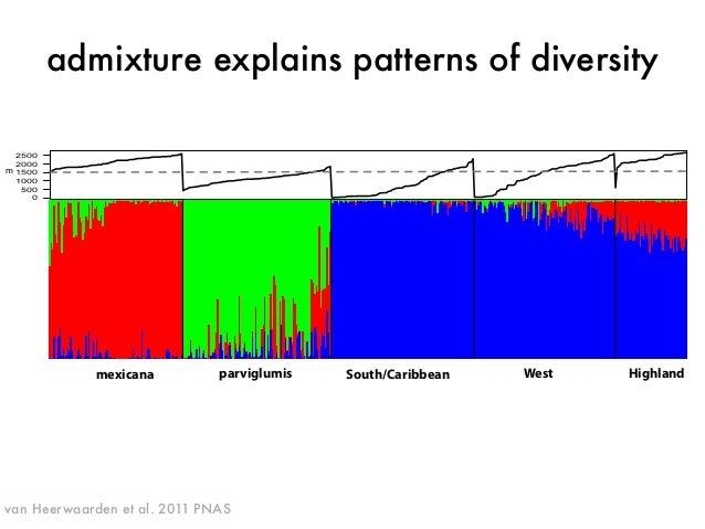 admixture explains patterns of diversity  mexicana parviglumis South/Caribbean West Highland  2500  2000  m  1500  1000  5...