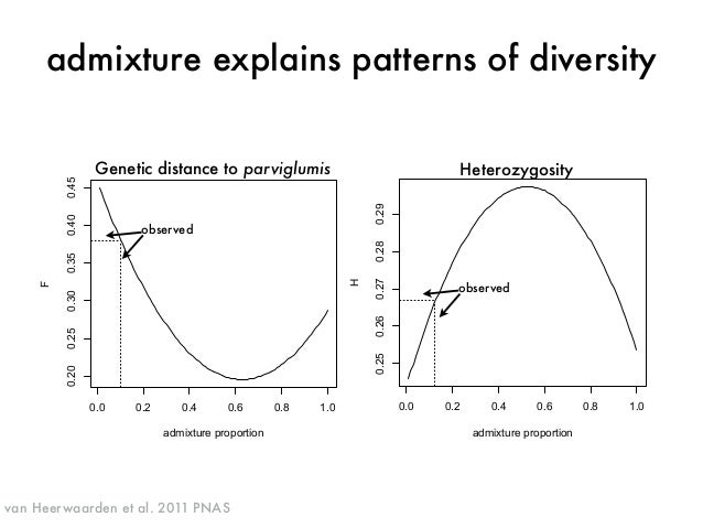 admixture explains patterns of diversity  H Genetic distance to parviglumis Heterozygosity  0.0 0.2 0.4 0.6 0.8 1.0  0.20 ...
