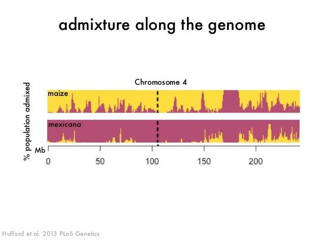 admixture along the genome  maize  mexicana  Mb  % population admixed  Chromosome 4  Hufford et al. 2013 PLoS Genetics