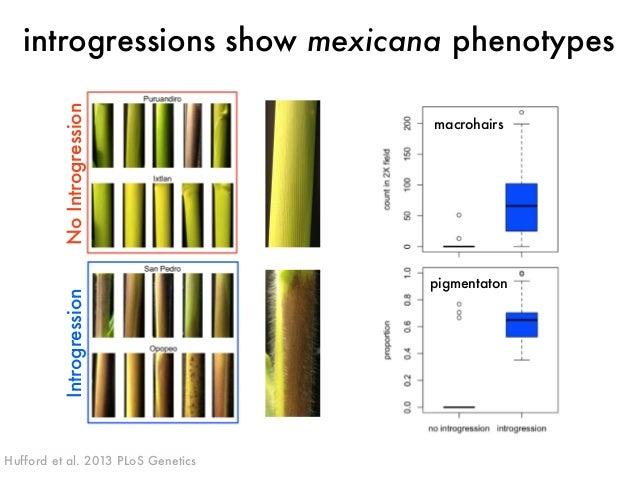 introgressions show mexicana phenotypes  Introgression No Introgression  Hufford et al. 2013 PLoS Genetics  macrohairs  pi...