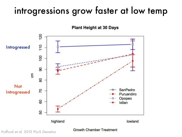 introgressions grow faster at low temp  Introgressed  Not  Introgressed  Hufford et al. 2013 PLoS Genetics