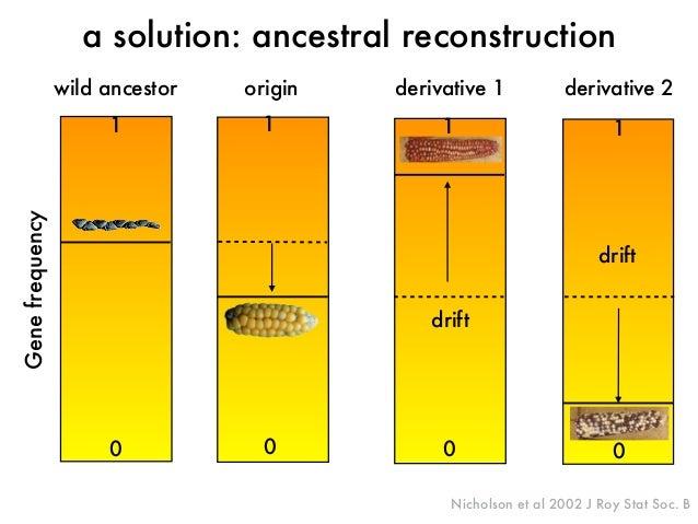 wild ancestor origin  derivative 1 derivative 2  Gene frequency  a solution: ancestral reconstruction  1  drift  1  drift ...