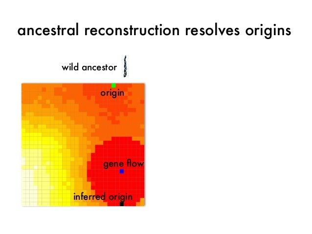 ancestral reconstruction resolves origins  wild ancestor  origin  gene flow  inferred origin