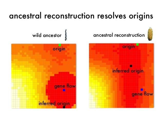 ancestral reconstruction resolves origins  ancestral reconstruction  origin  inferred origin  gene flow  wild ancestor  or...