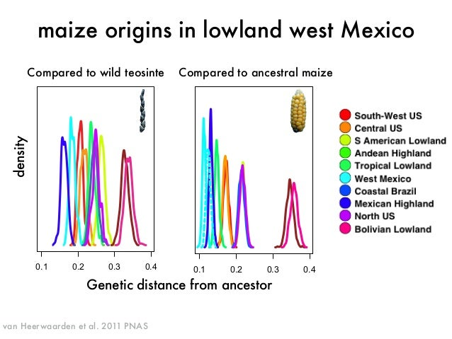 because the adaptive differences between highland and lowland  maize are profound (14, 29). In other crops, uncertainty ab...