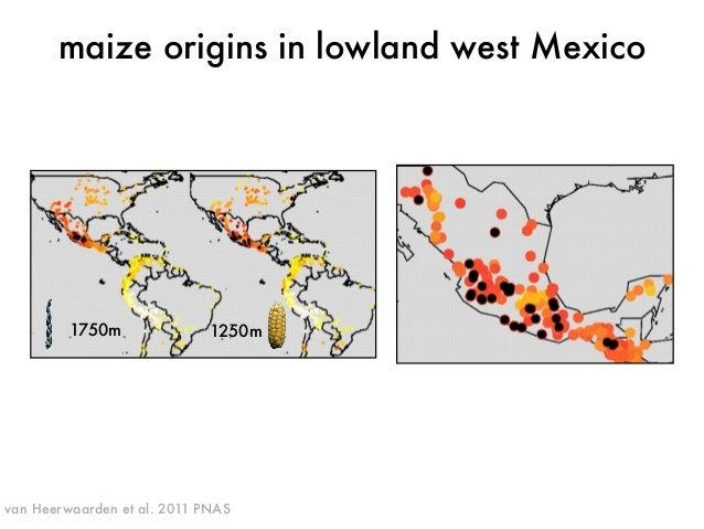 maize origins in lowland west Mexico  1750m 1250m  van Heerwaarden et al. 2011 PNAS