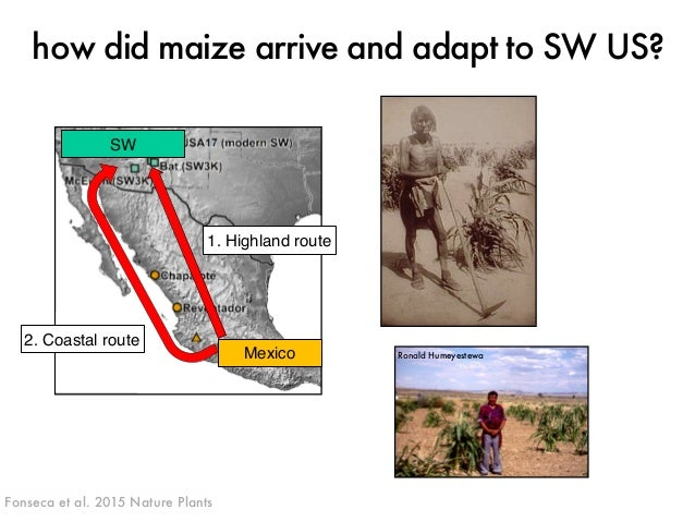 how did maize arrive and adapt to SW US?  J. ROSS-IBARRA / UC DAVIS  2. Coastal route  1. Highland route  SW  Mexico  Fons...
