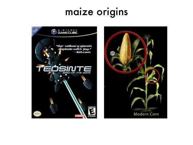 maize origins