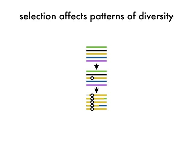selection affects patterns of diversity