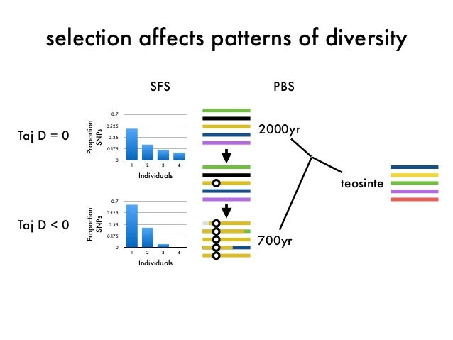 selection affects patterns of diversity  SFS  Proportion  SNPs  0.7  0.525  0.35  0.175  0  1 2 3 4  Individuals  Proporti...