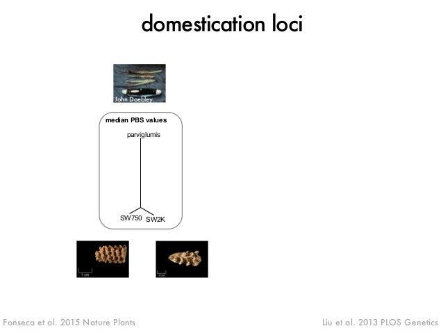 domestication loci  John Doebley  median PBS values parviglumis  parviglumis)  PBS(SW750 SW2K  dehyd1A  zagl1  su1  parvig...