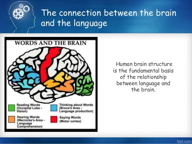 the connection between the human brain and behavior This area in pyschology holds the belief that there is a connection between the human brain is and behavior this area of psychology is closely.