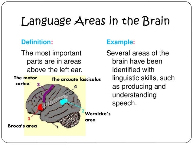 Neuroscience of multilingualism