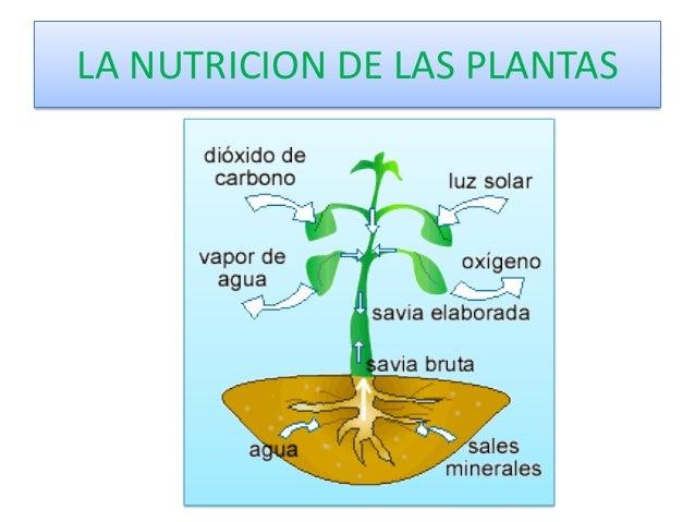la nutrici n de las plantas