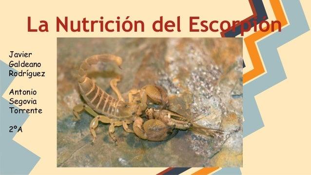 04ac19095ea1 La nutrición del Escorpión
