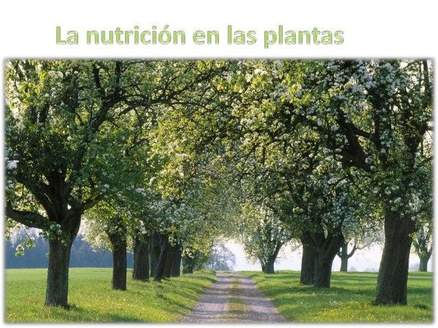 El alimento de las plantas • El agua y las sales minerales: las plantas lo obtienen del suelo o del agua donde crecen, ent...