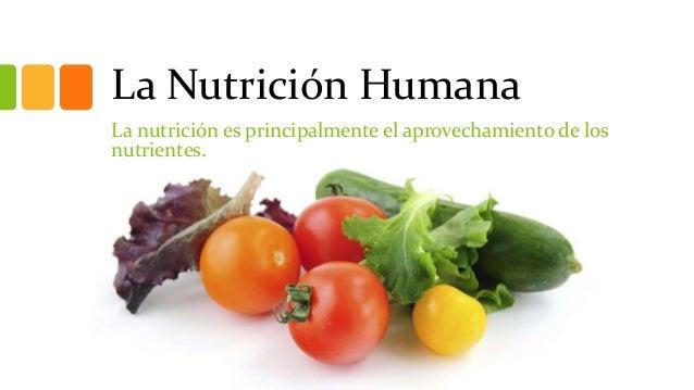 La Nutrición Humana La nutrición es principalmente el aprovechamiento de los nutrientes.