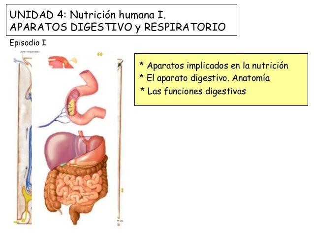 UNIDAD 4: Nutrición humana I.  APARATOS DIGESTIVO y RESPIRATORIO  Episodio I  * Aparatos implicados en la nutrición  * El ...
