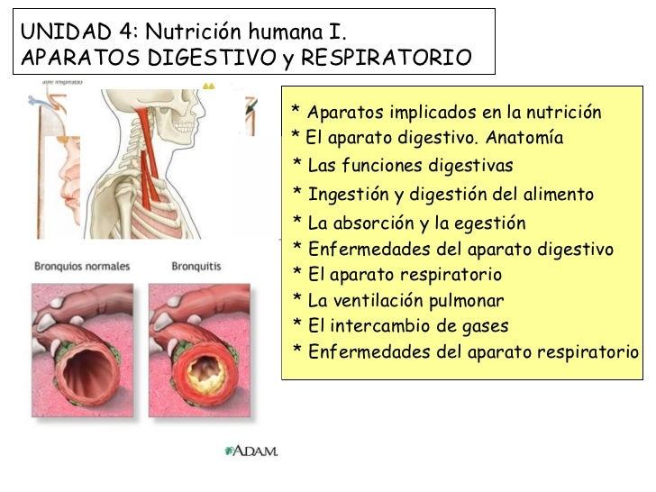 * Aparatos implicados en la nutrición * El aparato digestivo. Anatomía * Las funciones digestivas * Ingestión y digestión ...