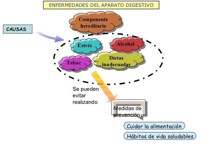 Medidas de prevención ENFERMEDADES DEL APARATO DIGESTIVO Componente hereditario Estrés Dietas inadecuadas Tabaco Alcohol S...